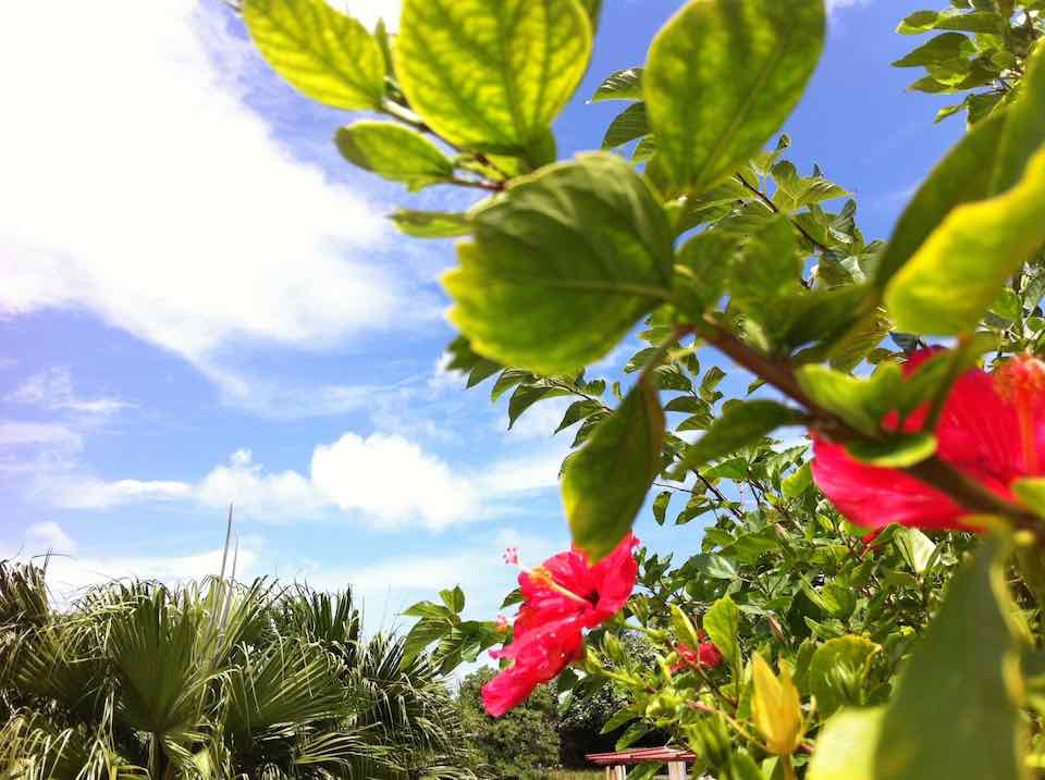 沖縄科学技術大学院大学等を核とした知的・産業クラスター形成推進調査
